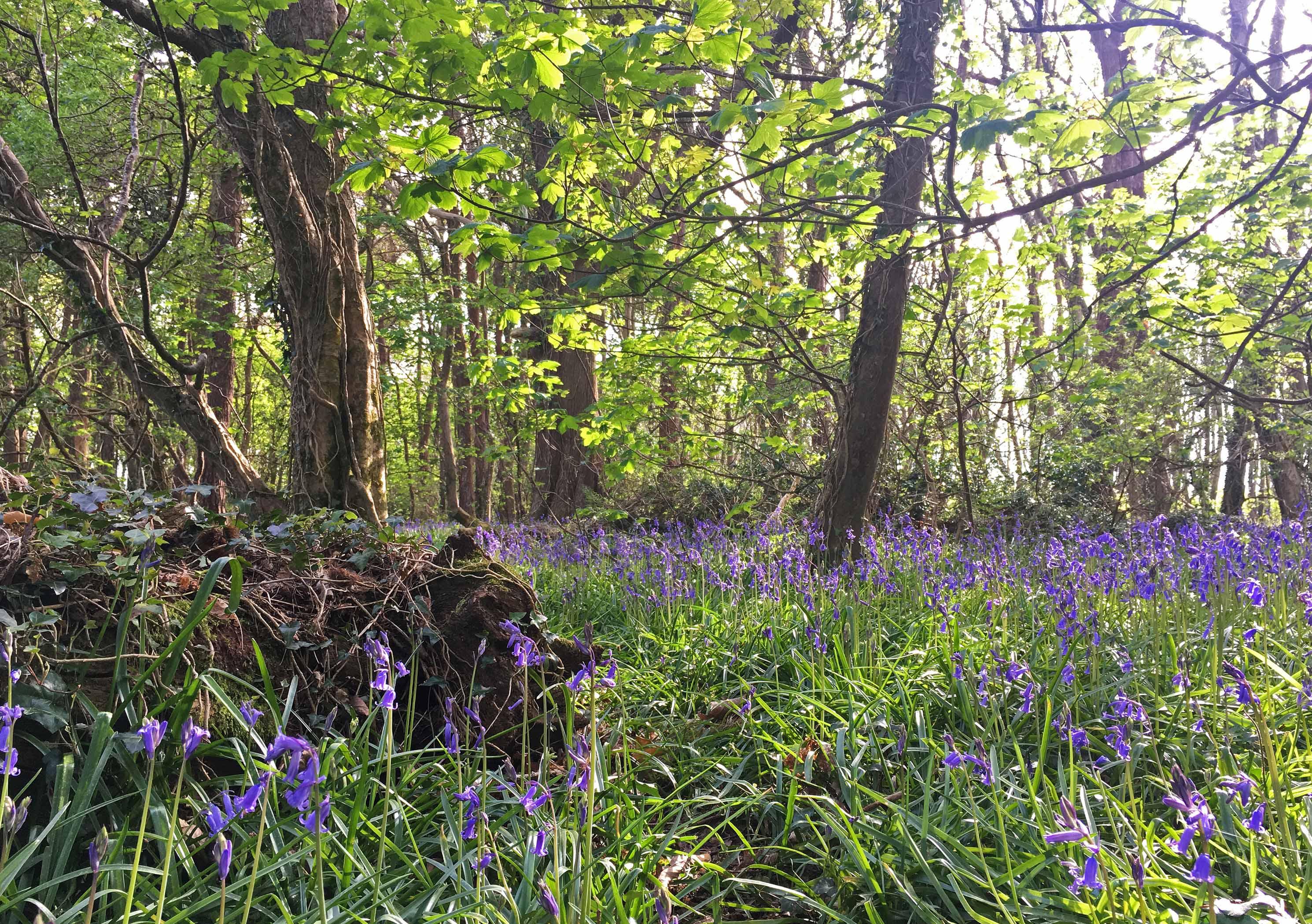 Wildflower Wood 1