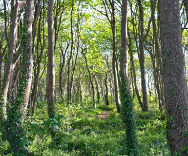Wildflower Wood view