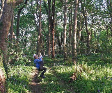 Wildflower Wood tree swing