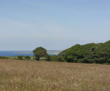 Wildflower Wood overlooks St Ives Bay